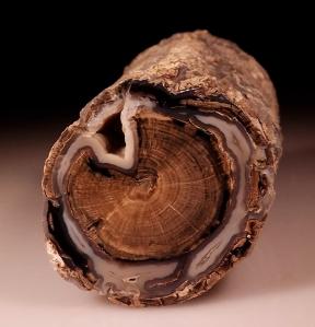 madera petrificada2