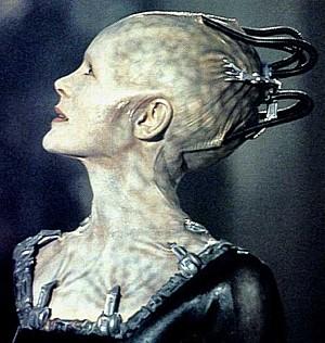 Draco-Borg_small